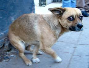 37++ Foto anjing bulldog seram terupdate